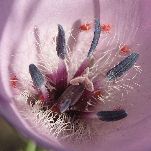 Spider mites on a flower